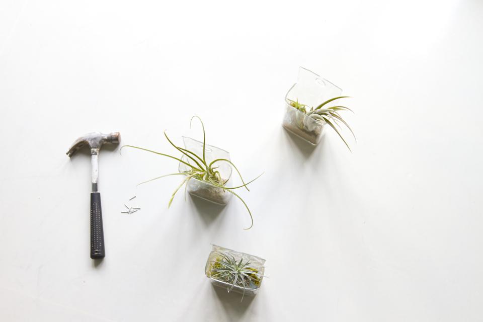 hanging-air-plants-00