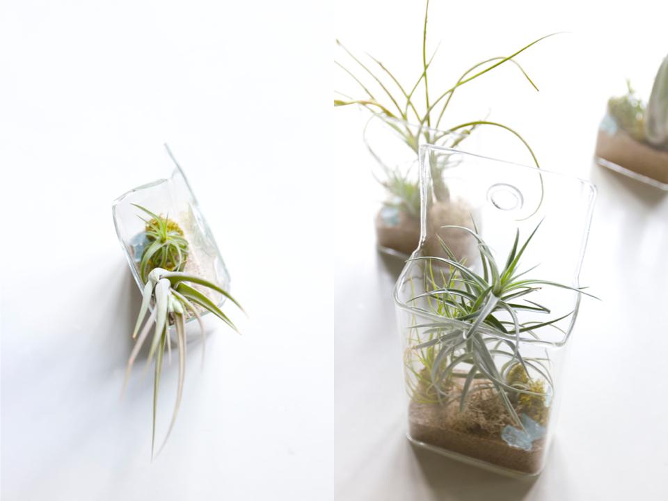 hanging-air-plants-10
