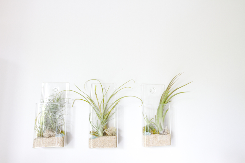 Diy Hanging Air Plants Succulence Plant Store In San