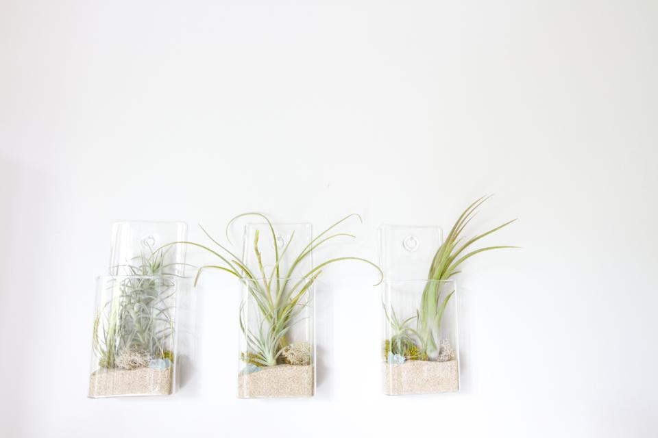 hanging-air-plants-14