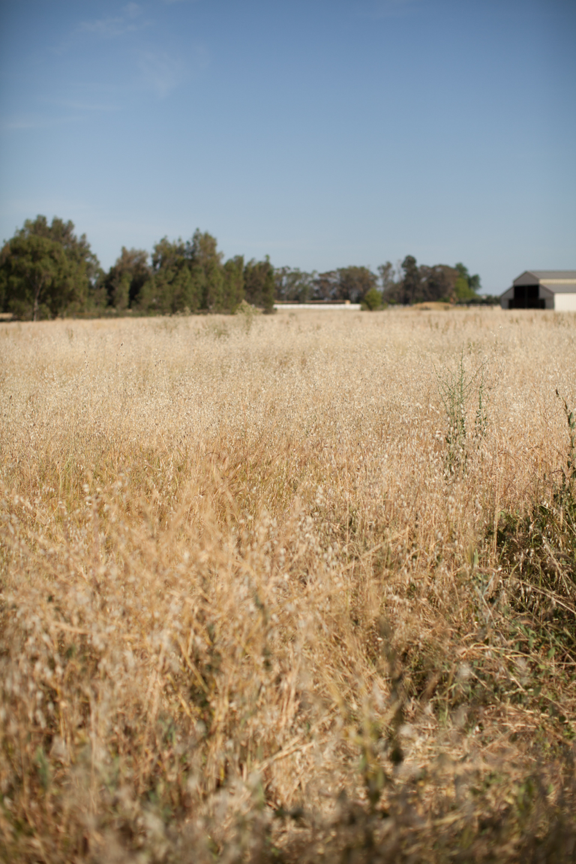 summer-farm-editorial-cheetah-is-the-new-black-bts-07