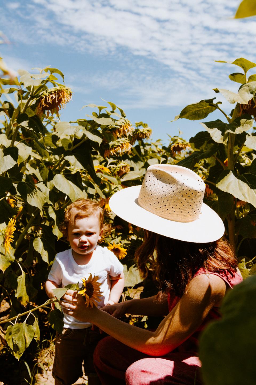 Sunflower Fields in Woodland