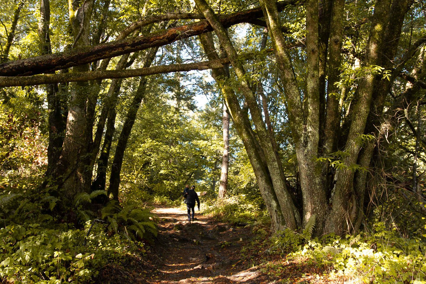 Point Reyes Family Getaway | Where to stay, things to do, and what to pack...